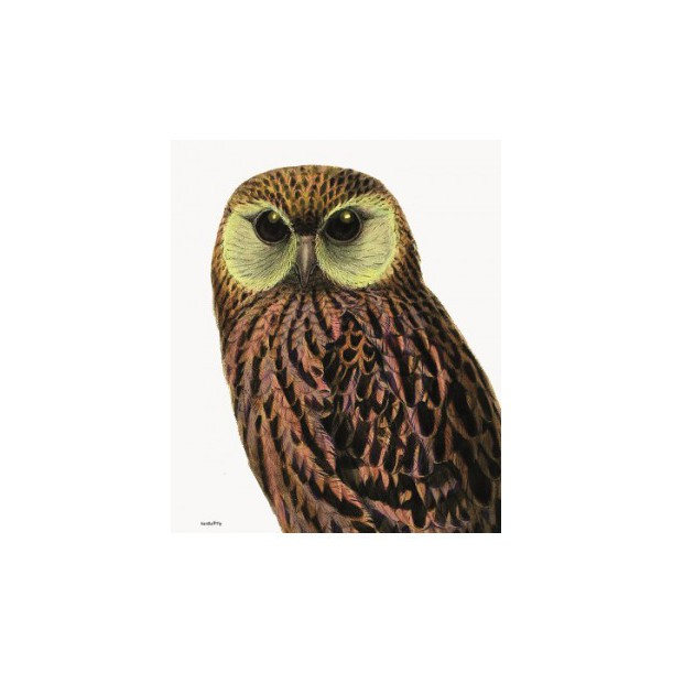 Print Green Eyed Owl Vanilla Fly