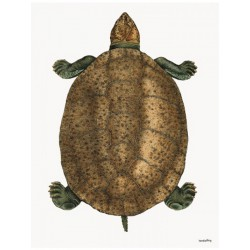 Affiche Turtle Vanilla Fly