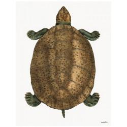 Print Turtle Vanilla Fly