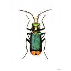 Affiche Bug Vanilla Fly