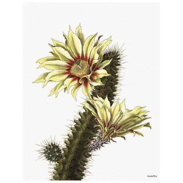 Print White Cactus Vanilla Fly