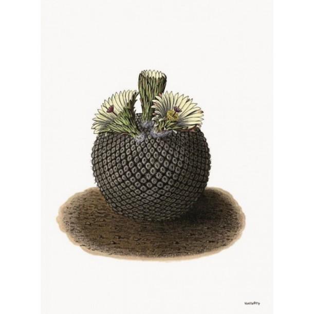 Print Round Cactus Vanilla Fly