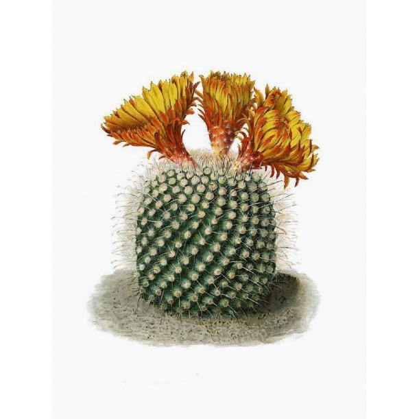 Print Orange Flowers Round Cactus Vanilla Fly