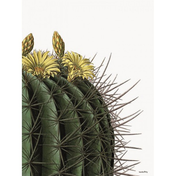Print Yellow Flowers Round Cactus Vanilla Fly