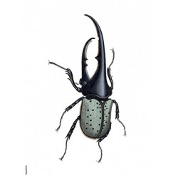 Print Green Bug Vanilla Fly