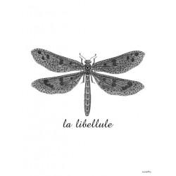 Affiche Dragonfly