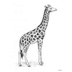 Affiche Giraffe