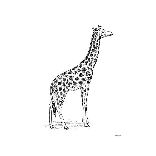 Print Giraffe