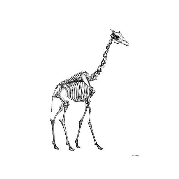 Print Giraffe Skeleton