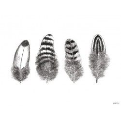 Affiche Feathers