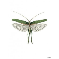 Print Green Moth Vanilla Fly