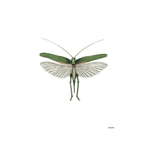Print Green Moth Vanilla Fly