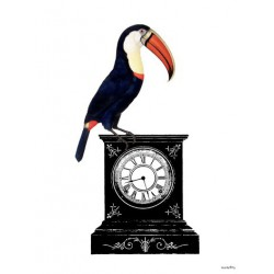 Affiche Pelican Watch Vanilla Fly