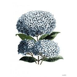 Print Hortensia Vanilla Fly